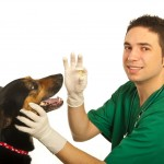 Tips for Administering Pet Medication