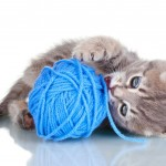 Common Household Dangers for Pets