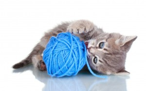 Cat chewing yarn.